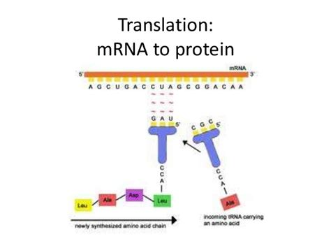 protein biology definition translation