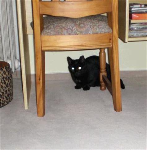 katze hat immer weichen stuhl verhaltensauff 228 lligkeit scheue katze