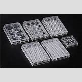 Cell Culture Plate | 503 x 335 jpeg 45kB