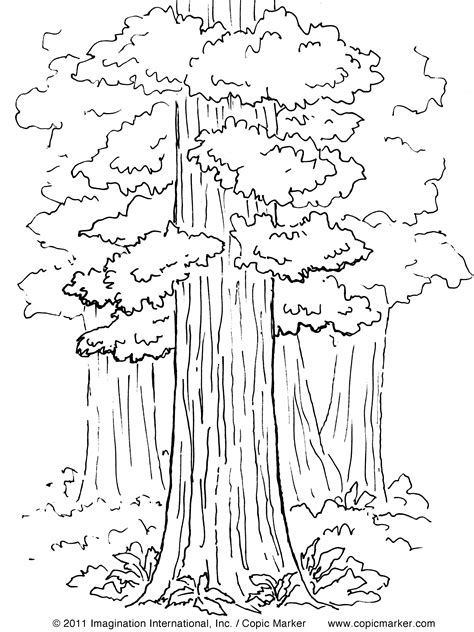 Coloring Page Of Redwood Tree | california redwood tree coloring pages coloring pages