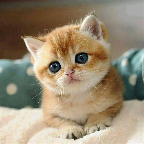 imagenes tiernas gatitos bebes pin de carmen avenda 241 o en beb 233 s bonitos pinterest gato