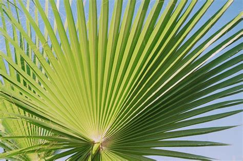 wallpaper daun palma qu 233 es una palmera y qu 233 tipos hay