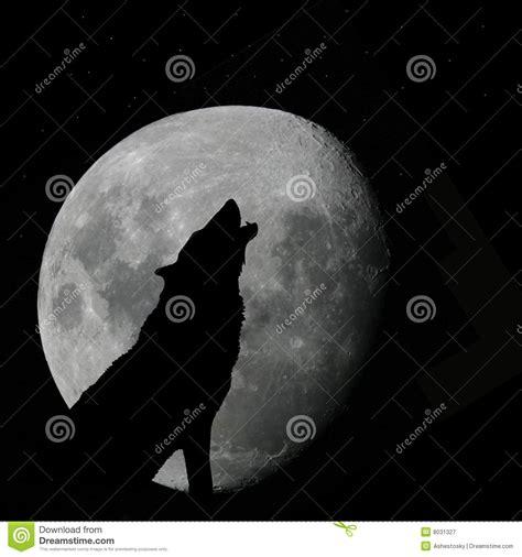 wolf howling  full moon stock illustration image