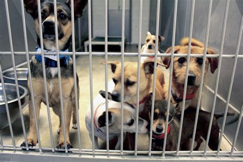 what to for bringing rescue dogs for adoption at home