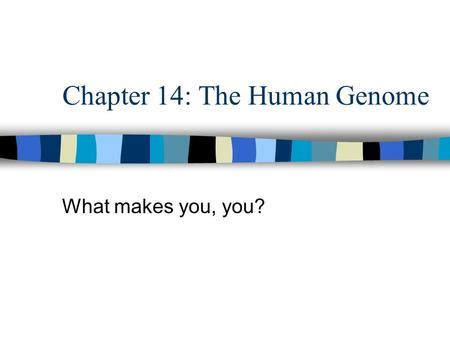 chapter 14 the human genome section review 14 1 human genetics review what is a gene a gene is the unit