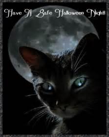 halloween black cats october 2013 c 233 ad m 237 le f 225 ilte