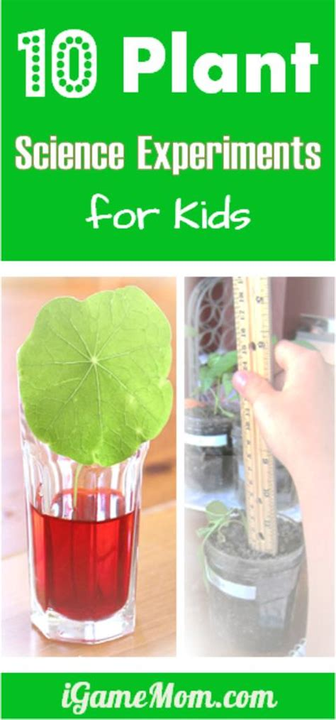 10 plant science experiments for