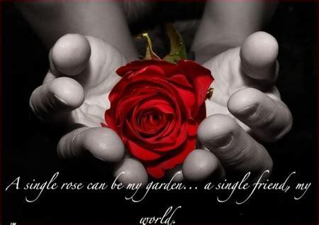 single rose    garden  single friend