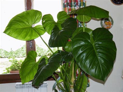 plante verte a grande feuille photo de fleur une