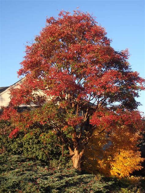 calculate     tree  holden arboretum