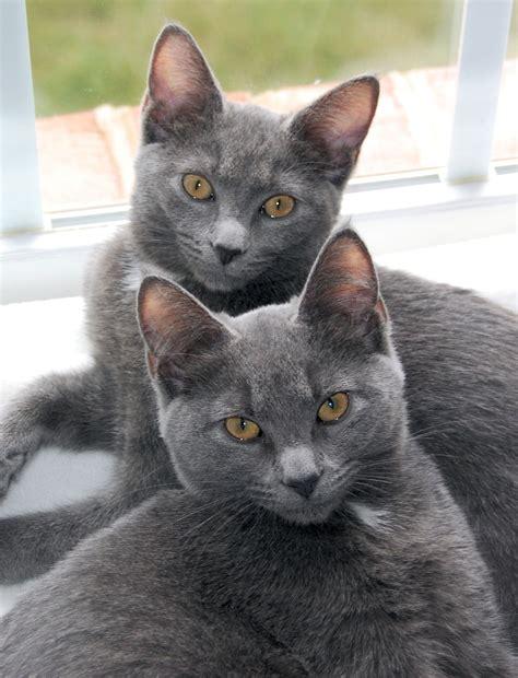 File:Korat Sisters   Wikipedia