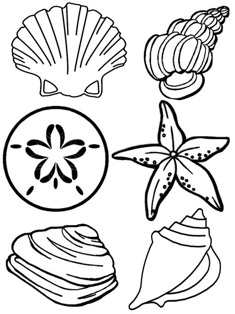 color shell free printable seashell coloring pages for