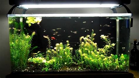 Aquarium V Ii seaclear system ii update 7 new lights