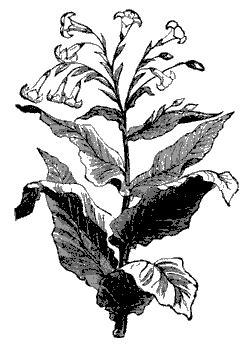 Jilbab Instan Syiria Flora Siria Flora flora fauna and spirits of prax