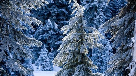 frosty tree frosty trees wallpaper 1207685