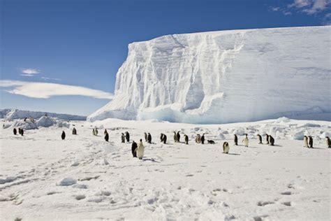 antarctica facts  kids geography continents facts