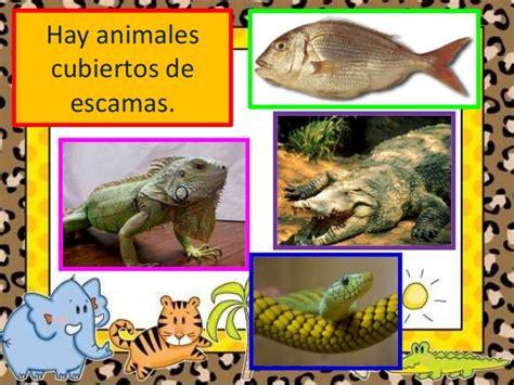 imagenes animales con escamas 191 c 243 mo est 225 n cubiertos los animales