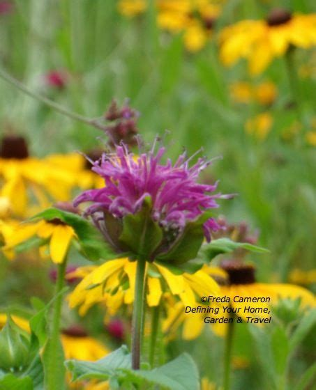 1000 images about gardening deer resistant perennials on