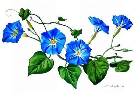 fiori disegni i fiori disegni canelle 1 arte