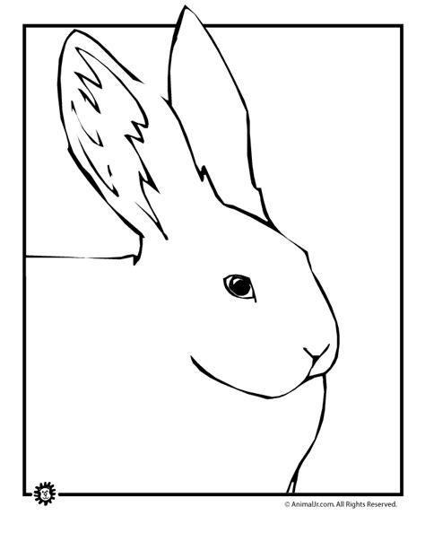 big bunny coloring pages large bunny coloring page woo jr kids activities