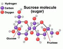 the difference between sucrose and fructose difference