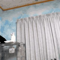 cat on chair gif cat jumping gif find on giphy