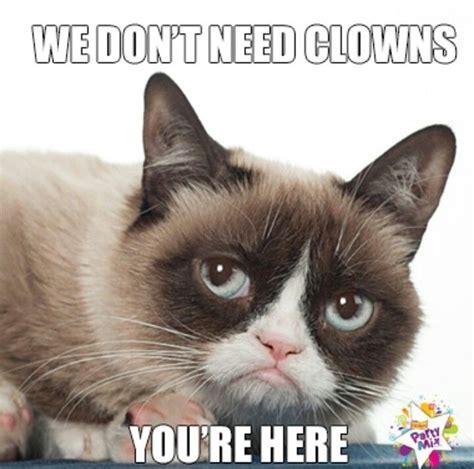 Best Angry Cat Meme - 191 best images about grumpy cat rocks on pinterest