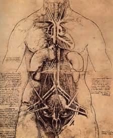 anatomy leonardo da vinci 1452 1519 drawings album