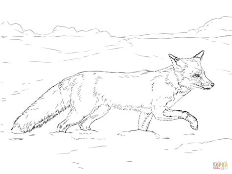 tundra animals coloring pages free printable pictures