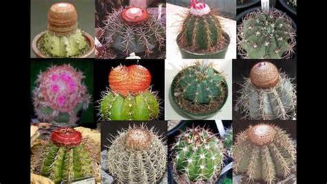 jacques dutronc cactus jacques dutronc les cactus youtube