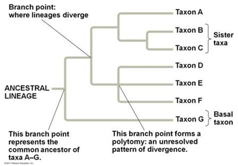 what do trees represent chapter 26 phylogeny and the tree of life ppt video quia 9ap chapter 26 phylogeny and the tree of life