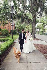 golden retriever wilmington nc 37 best images about weddings on vineyard wedding and family photos