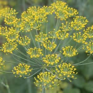 gelb bl 252 hende pflanzen und blumen bestimmen