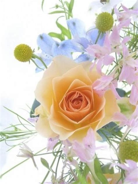 imagenes rosas de todos los colores lista el lenguaje del color de las rosas
