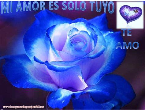 Imagenes De Rosas Azules Con Frases De Amor | fant 225 sticas rosas de amor para descargar y compartir