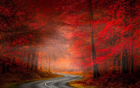 nature landscape road asphalt forest red grass