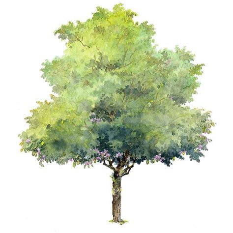 water color tree 538 best images about watercolor trees on