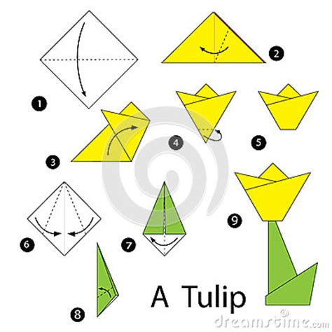 Origami Tulip Step By Step - step by step how to make origami tulip stock