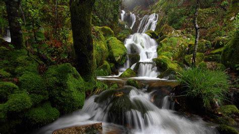 water waterfall forest wallpapers hd desktop