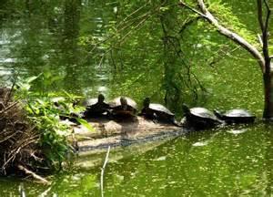 Comfort Inn Suites Texas City Big Thicket National Preserve Botanical Gardens Amp Shangri
