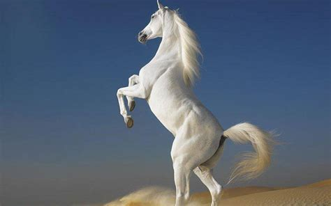 1000 images about magnificent horses on pinterest white