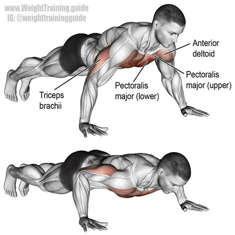 bench press up the push up is an extremely versatile bodyweight exercise