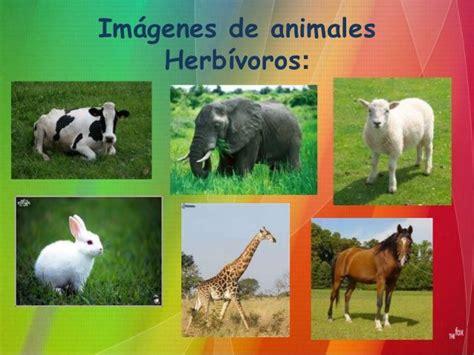 imagenes de animales por su alimentacion clasificaci 243 n de animales seg 250 n su alimentaci 243 n