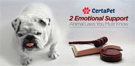 emotional support laws 2 ironclad emotional support animal laws must read