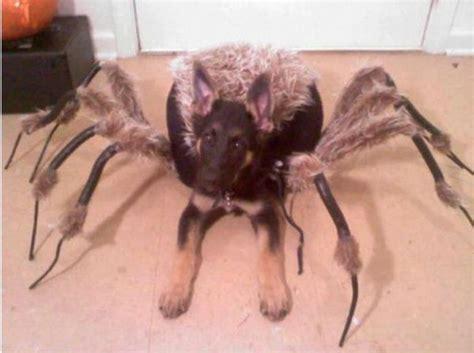 spider puppy spider spider neatorama