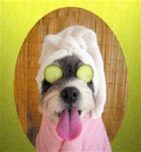 dogs and cucumbers grooming edinburgh grooming salon waggly tails