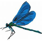 Dragonfly Art Clip At Clkercom  Vector Online Royalty