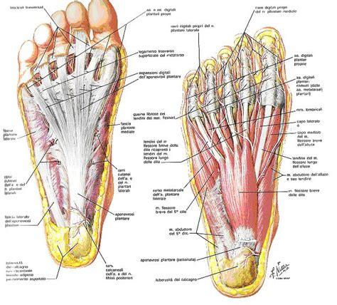 dolore arco plantare interno dolore al piede tra tallone e arco