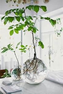 agréable Plante Verte Dans Une Chambre #2: plante-verte-int%C3%A9rieur-d%C3%A9co-vase-cuisin-d%C3%A9tail.jpg