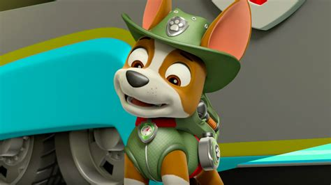 what of is tracker from paw patrol paw patrol su nickelodeon sono arrivati i nuovi episodi